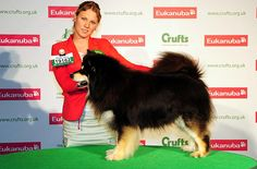 FIDELIS DUURI, Finnish Lapphund