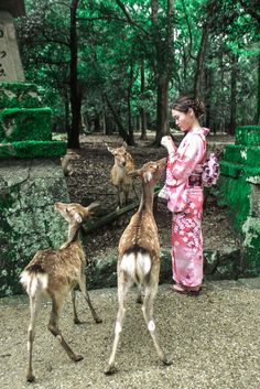 Deer feeding in Nara.