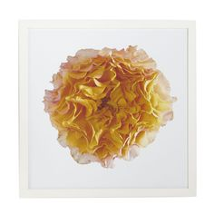 Yellow Antique Rose Wall Art