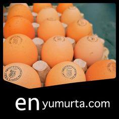 Organik yumurta çiftlikten