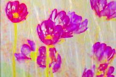 """'Vorhang """"Pinkblüten""""' von Rudolf Büttner bei artflakes.com als Poster oder Kunstdruck $18.71"""