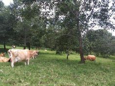 Integrating Livestock in the Food Forest