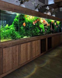 Aquarium Care for Freshwater Fish Diskus Aquarium, Aquarium Design, Saltwater Aquarium, Planted Aquarium, Freshwater Aquarium, Aquarium Ideas, Fish Aquariums, Fish Tank Terrarium, Discus Fish