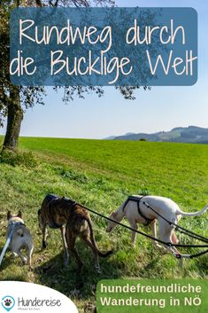 Hiking in the hunchbacked world - Wandern in der Buckligen Welt A dog-friendly hike in the south of Lower Austria. Also suitable for families, since it is the playground circuit. Diet Program, Dog Travel, Coconut Yogurt, Vegan Crackers, Back Gardens, Vegan Recipes Easy, Dog Friends, Hiking, Horses