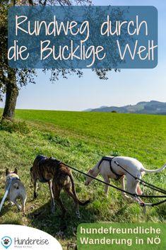Eine hundefreundliche Wanderung im Süden Niederösterreichs. Ebenso familientauglich, da es sich um die Spielplatzrunde handelt.  Hund | Hunde | Wandern | Wien | Umgebung | Österreich
