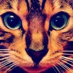 The Cat  From $39.95 on my Instacanvas Gallery - Instagram artist marketplace