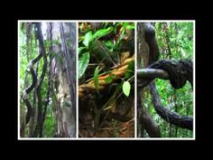 ▶ Ayahuasca : Ancient Plant Medicine - YouTube