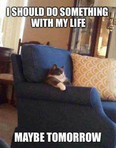 Best of LOL Funny Animals pics (12:02:31 PM PST Saturday, February 28, 2015) – 12 pics