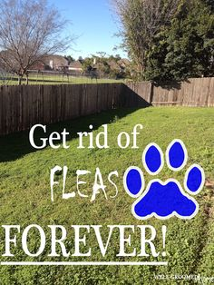 Organic way to get rid of fleas. Pls read the whole post, for it offers warnings to those who may be effected by using this.