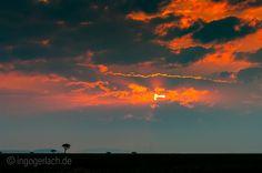 Sunrise.   Masai Mara.   Kenya.   More www.shop.ingogerlach.de