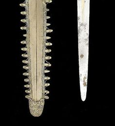 Closeup:  Push Dagger and Shark's tooth Scabbard  Dated: 18th century Culture: Indian Measurements: 62.8 cm long including scabbard
