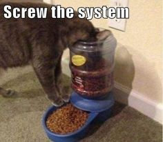 I Make My Own Rules #cats