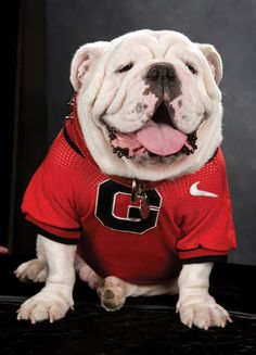 The most recognized NCAA mascot in the land! GOO DAWGS!!