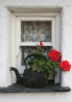 Geranium: my dad call ALL flowers geranium! Every Friday he'd come home with a bunch of geraniums for mum! Dream Garden, Garden Art, Cottage Windows, Red Geraniums, Through The Window, Window Boxes, Window Sill, Lace Window, Window Ledge