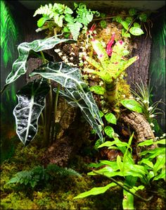 DIY Gecko Vivarium Background