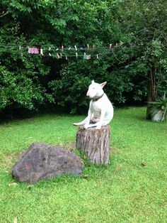 this bullterrier has found a tree stump to sit in contemplation