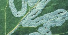 Como aplicar enxofre como fungicida em uma planta