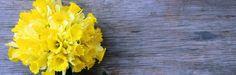 12 Flower Essences For The 12 Signs Of The Zodiac - mindbodygreen.com