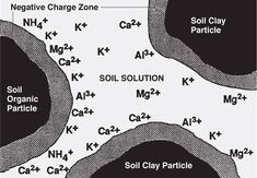 Potassium pooling is increase with high soil organic matter.