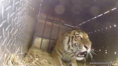 Watch These Animals Being Freed for the Very First Time! - YouTube