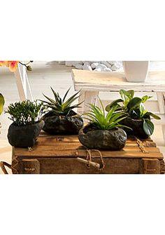 Kunstplant op steen, Home Affaire, 4-delig set Vase Shapes, Plants, Plant, Planets