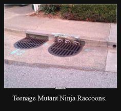 Teenage Mutant Ninja Raccoons. | Lustige Bilder, Sprüche, Witze, echt lustig