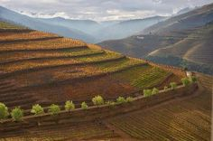Vineyards - Douro Valley, Portugal