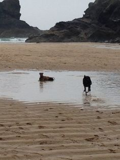 Fun on the beach at Porthcothan. Cooling off after a run!