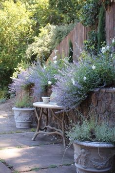Wall of lavender...
