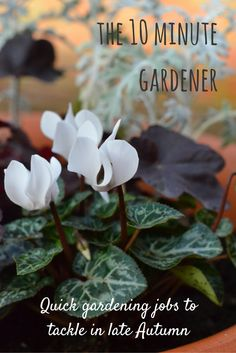 Gardening jobs for late Autumn with the 10 minute gardener: prepare your garden for the cold weather and the Spring that follows it with these quick jobs.
