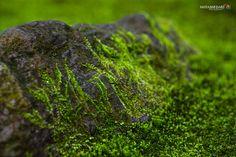 岩と緑色のカビ by Dario Hayashi on 500px