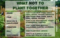 What not to plant together