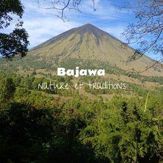 Bienvenus à la ville de Bajawa, petite communauté située à 1200 mètres d'altitude, devenue la base idéale pour explorer les villages Ngadas de Bena, Luba e