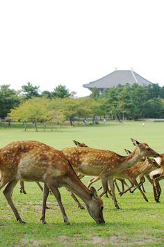 BEST THIMG EVER Nara Park, Nara