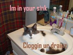 Funny Cat Picture #60