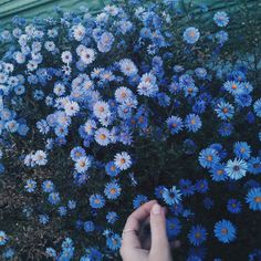 Flowers blue and hand image pretty things pinterest flowers blue and nature image mightylinksfo