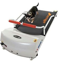 Treadmill specially for dogs. Weird but I guess dog's need their exercise too haha