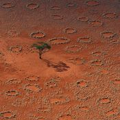 Theres a mystery in West Africa thats puzzled scientists for years. Strange circles of bare soil appear in grassland; theyre commonly called fairy circles. These naturally occurring shapes last for decades, until the grass eventually takes over and the circles fade.  Now German scientists think they have an explanation — a horde of insects seems to be bioengineering thousands of miles of desert.