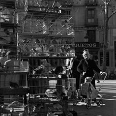 Francesc Català-Roca (Valls, Tarragona, España, 1922 - Barcelona, España, 1998): La rambla de los pájaros 1950 (ca.) | Museo Nacional Centro de Arte Reina Sofía