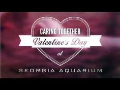 See how we care together for our sea otters! They received a special (and very cute) Valentine's Day enrichment.