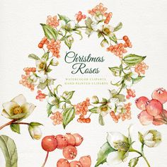 Christmas roses christmas watercolor watercolor by DottyCreative