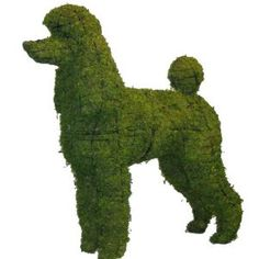 Poodle Topiary! This would be fabulous in a French style garden.
