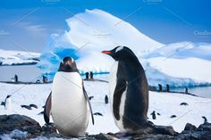 Two penguins resting Photos Two penguins resting on the stony coast of Antarctica. Blue iceberg in the background.------------ by Volodymyr.Goinyk