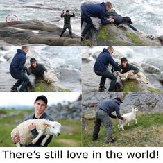 Norwegian Men, Human Kindness, Kindness Matters, Faith In Humanity Restored, Funny Animal Pictures, Animal Pics, Make Me Smile, Animal Rescue, Cute Animals