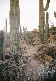 A Day in the Arizona Desert   The Fresh Exchange