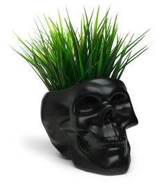 Grow your favorite plants in a gothic style ceramic skull. Please don't use real skulls to plant things, even if you saw it on Pinterest. That never works out how it does online.