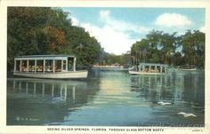 Seeing Silver Springs Florida from   famous glass bottom boats!!  was fun as a kido to see all those fishies!!