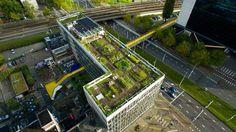 Dakakker Rotterdam. Top down / private
