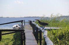 El Aguapé Lodge, situado en Colonia Carlos Pellegrini, a orillas de la laguna Iberá y cerca de una zona con abundante vida salvaje, ofrece pileta exterior,...