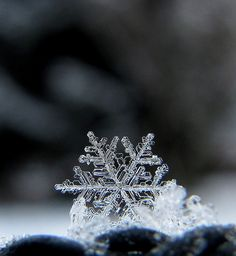 By carolyn_in_oregon...how incredible is a snowflake up close....AMAZING